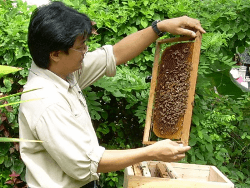 beekeeping and externalities