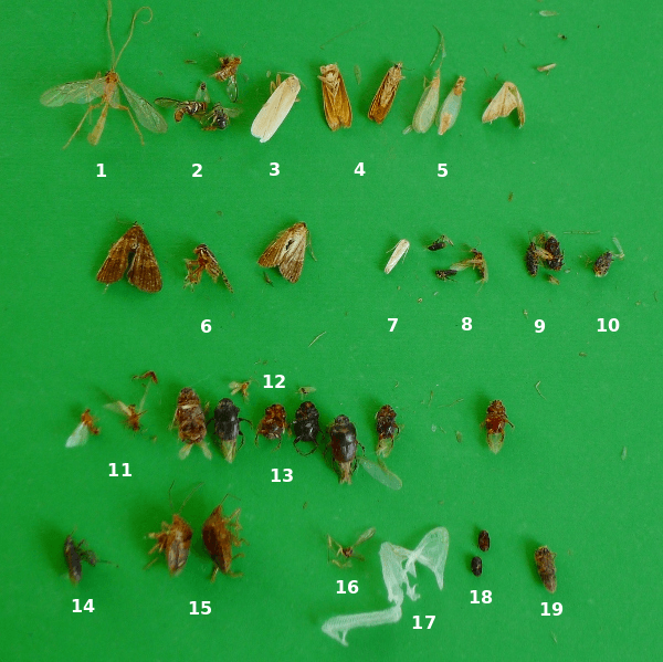 18 Species Of Insects From A Ceiling Lamp