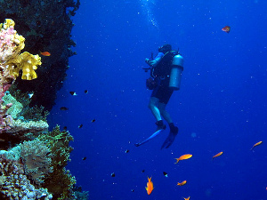 coral wall diving